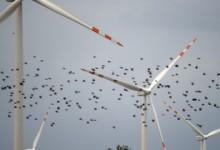 Vindkraftverk dödar vår fåglar!