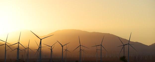 Stor vindkraftpark i öken