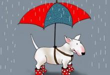 Hund Paraply!