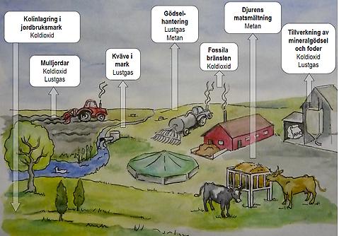 kött och miljö