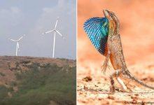 Vindkraft agerar som ett nytt topprovdjur